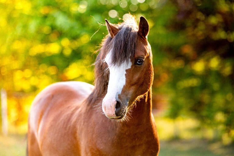 God ponyvelfærd – ikke så lige til som mange måske tror