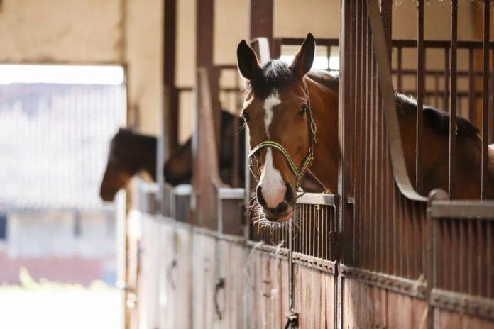 Køb og salg af heste