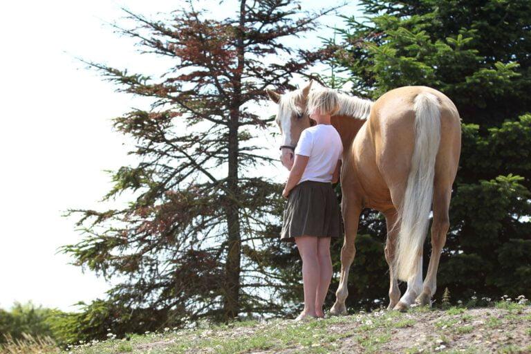 Derfor kan en fysisk skade ændre din hests adfærd