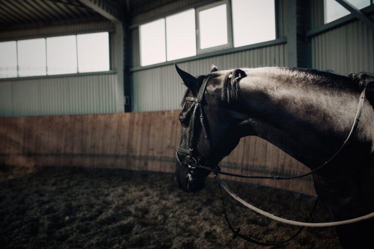 De slukkede heste: Når nervesystemet reagerer på længerevarende stress