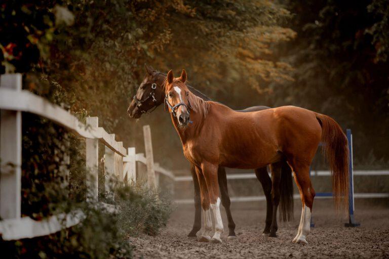 En god kropsholdning er vigtig for hesten – også når vi ikke rider