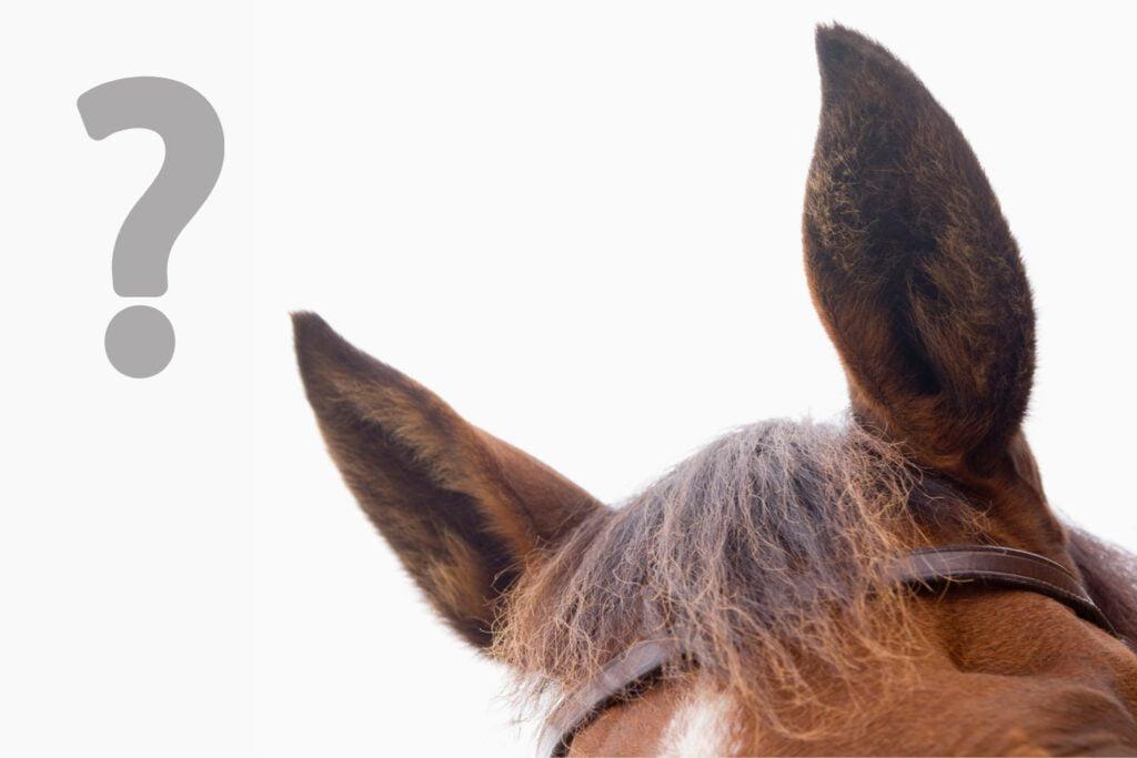 heste forstår mennesker til en vis grad