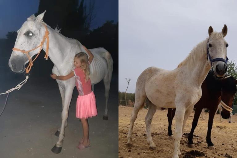 Donér dit brugte udstyr og hjælp dansk hesteinternat i Spanien