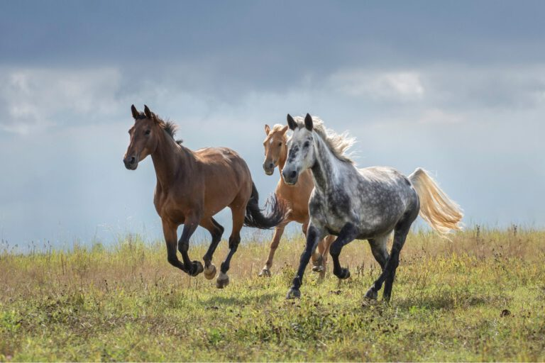 Nyt digitalt magasin: Skyd sommeren med din hest godt i gang