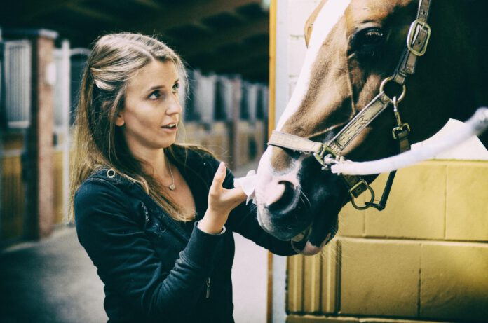 Hest asymmetri