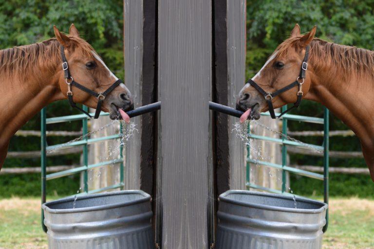 Væskebehov: Så mange liter væske indeholder din hest