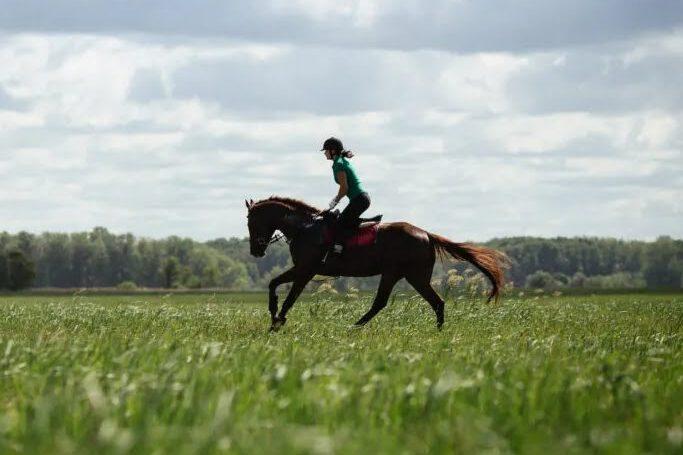 7 tips: Sådan får du en fantastisk dagstur med din hest