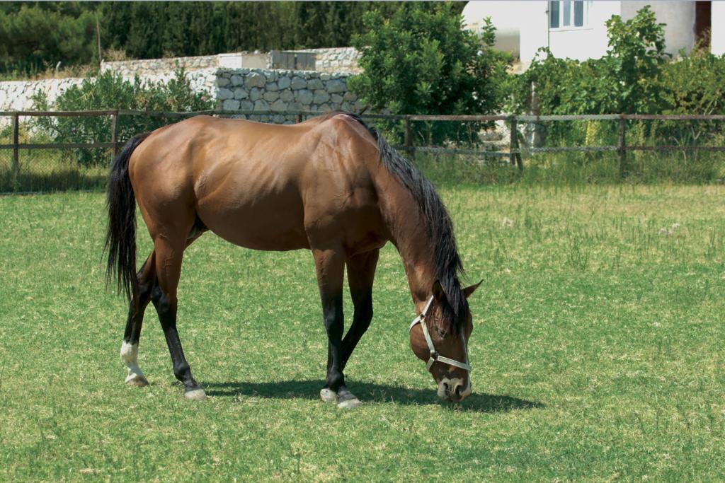 Straafoder-hest-spiser