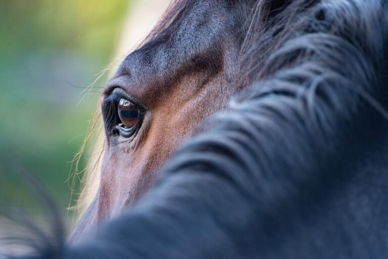 Er din hest ensom? Social isolation kan være skadeligt for din hest