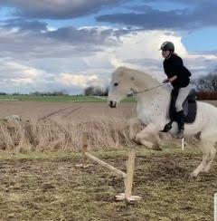 Hest med grå stær rider