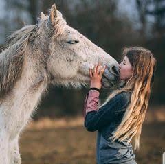 Hest med grå stær