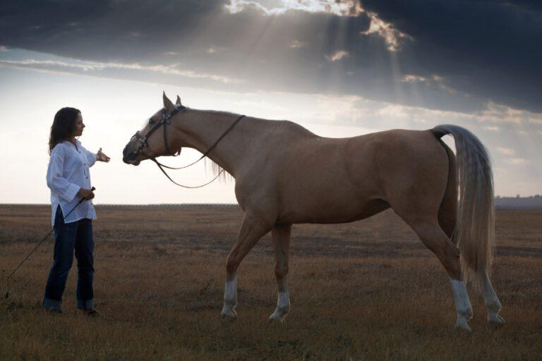 """Ditte Young: """"Vores intention er vigtig for at heste kan føle sig trygge"""""""