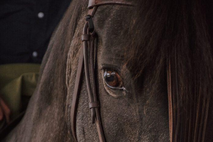 Hesten som terapeut