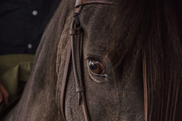 Dine ubalancer påvirker hesten. Derfor skal den ikke være din terapeut