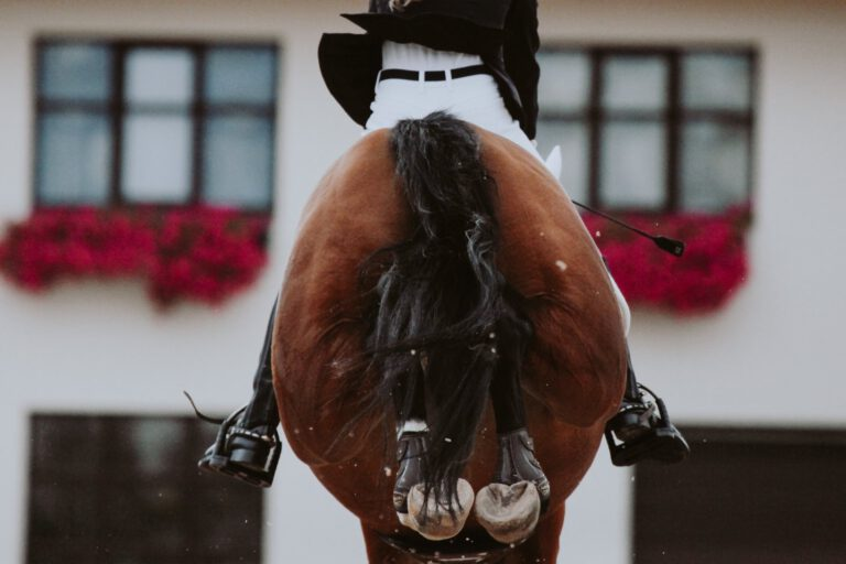 Anerkendt specialist fastslår: Heste bukker primært fordi de har ondt