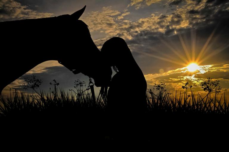 12 ting, du kan lave med din hest – uden at være på ryggen