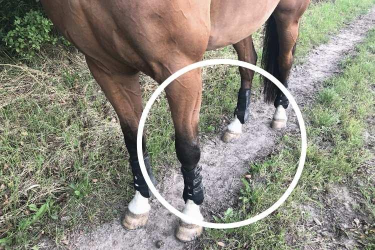 Hest på løbesti