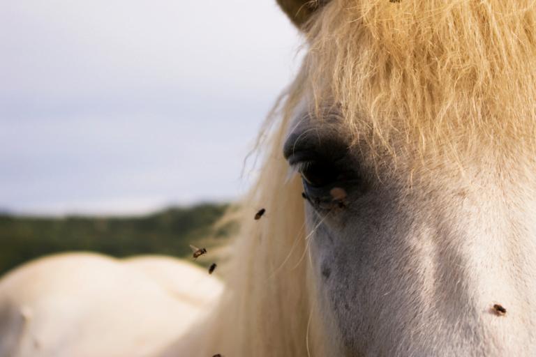Insektprodukter til hest og rytter – her er, hvad du skal bruge