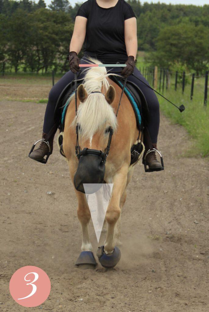 Går hesten catwalk? Haflinger