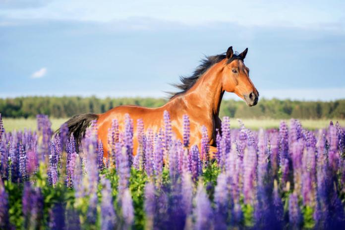 En hest på marken