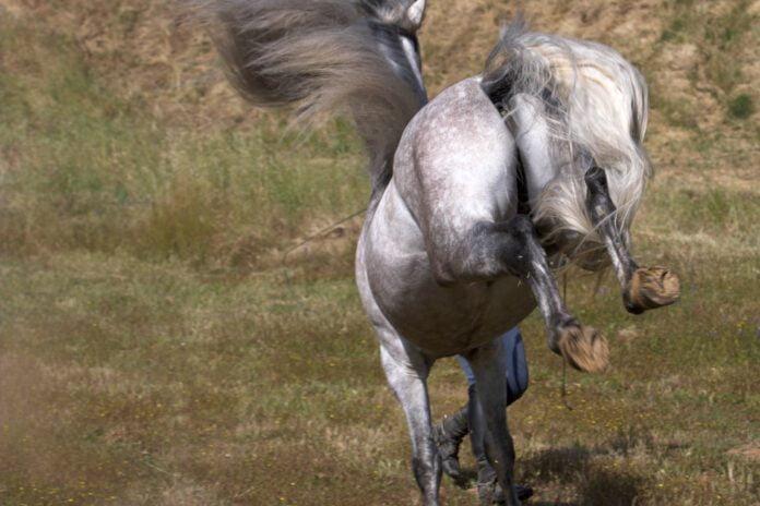 Farlig hest