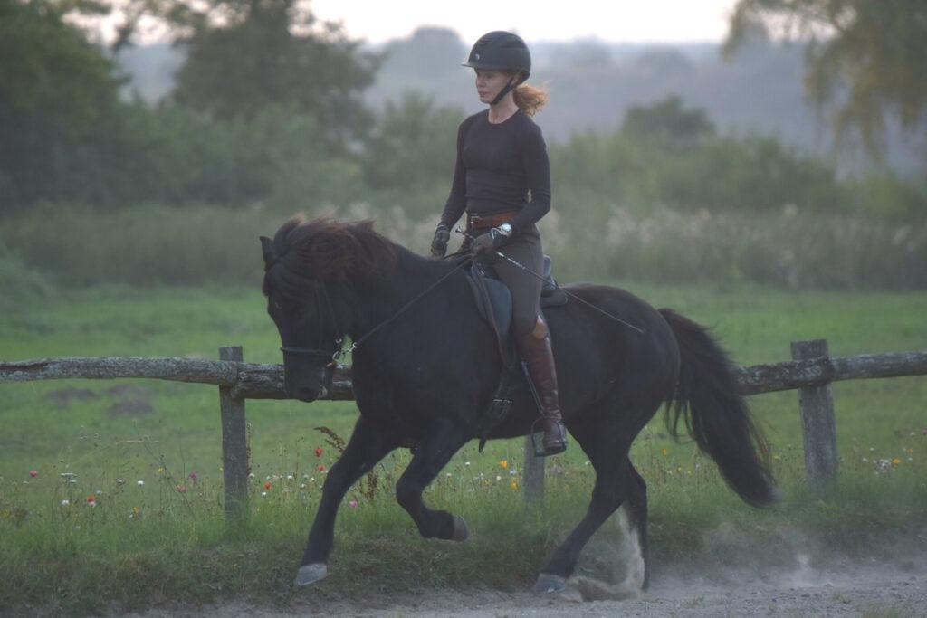 Islandsk hest bliver redet på ridebane med naturen i baggrunden