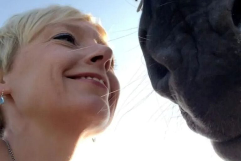 NYHED: HorseMama Bodywork (hestemassage og lidt til)