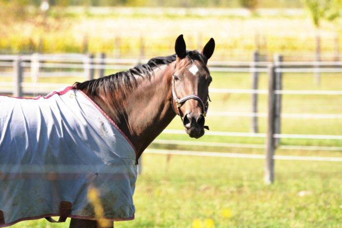 Dækken på hest