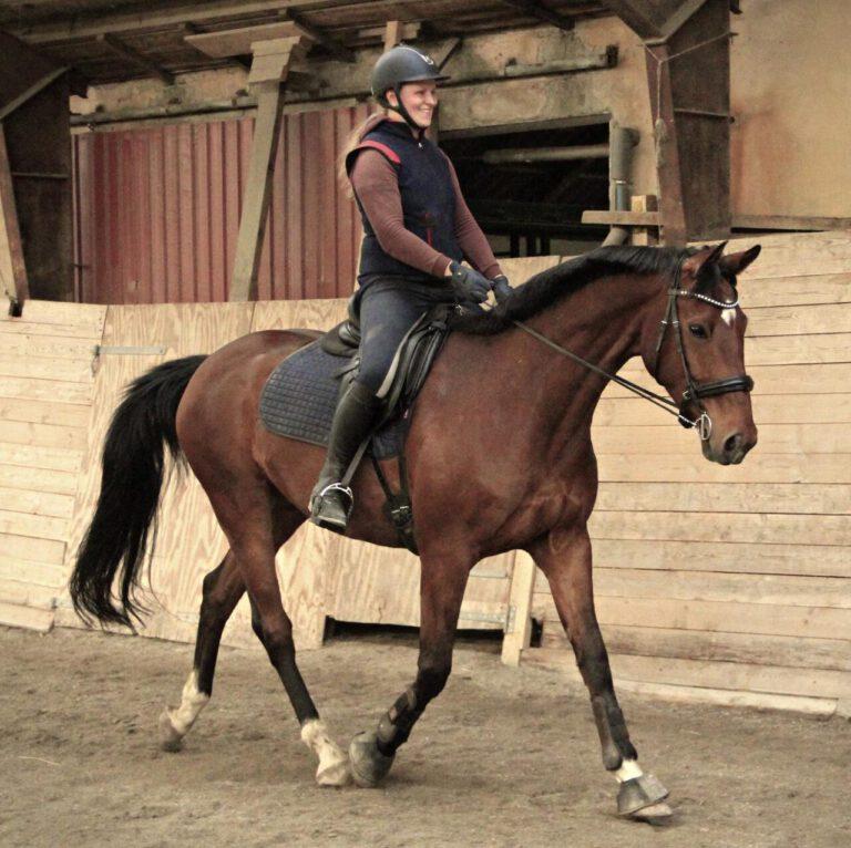"""Går din hest """"catwalk""""? Sådan spotter og afhjælper du problemet"""