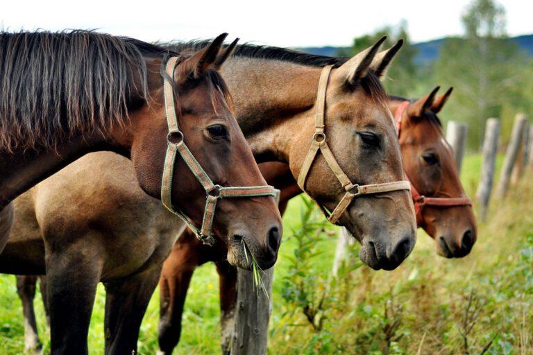 10 fun facts om heste og deres racer – vidste du det?