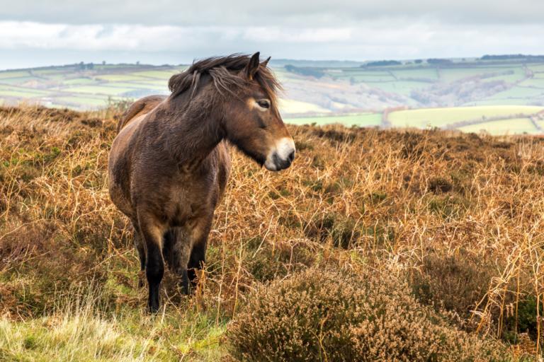 """Dyrlæge om rewilding: """"Dyr bag hegn er ikke vilde"""""""