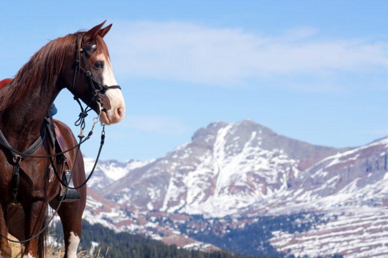 Rocky mountain: Den tøltende amerikaner med de særlige farver