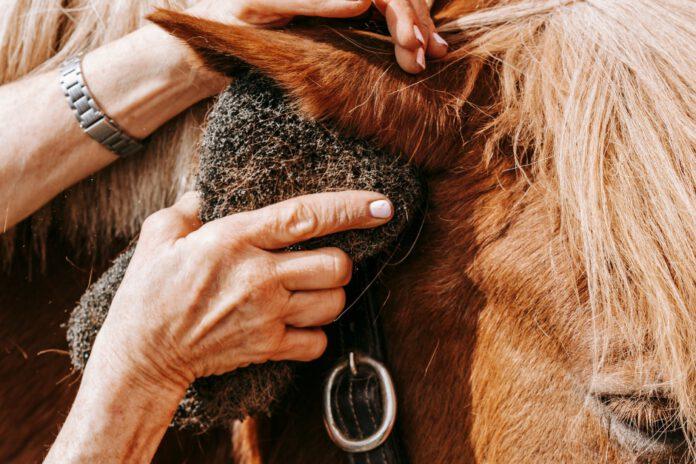 Hest fælder