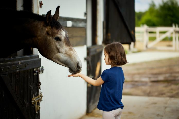 Hest og barn