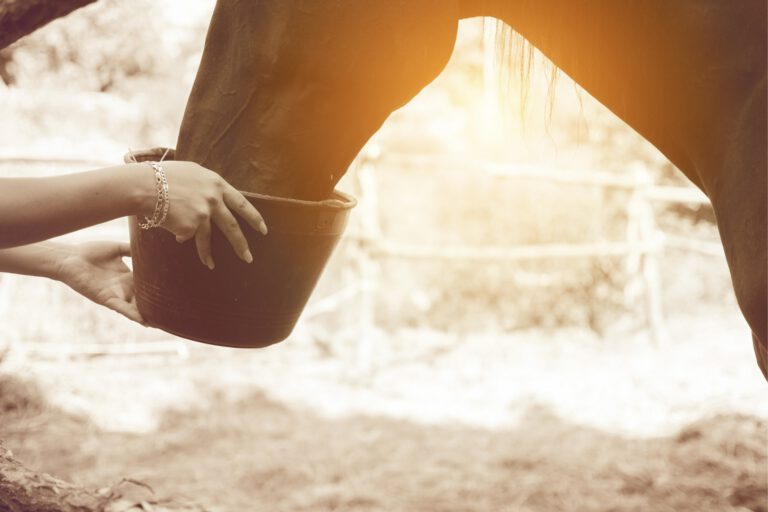 Grutforgiftning: Forædning hos heste er som regel menneskets skyld