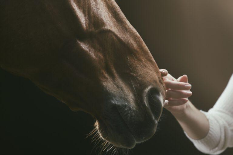 Når hesten har skeletter i skabet: Vi kender ikke altid hele historien