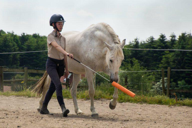 Intrinzen-øvelser: Øg hestens kropsbevidsthed med klikkertræning