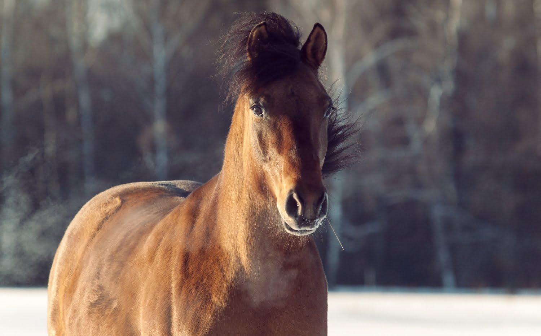 New Forest: Mød den sporty og charmerende pony med rosetter i trensen